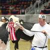Royal16_Holstein_L32A4748