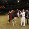 Royal16_Holstein_1M9A1847