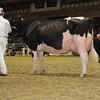 Royal16_Holstein_1M9A1181
