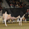 Royal16_Holstein_1M9A1662