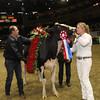 Royal16_Holstein_1M9A1842