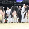 Royal16_Holstein_L32A5014