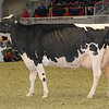 Royal16_Holstein_1M9A1292