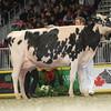 Royal16_Holstein_L32A4901