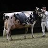 Royal16_Holstein_1M9A1485