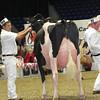 Royal16_Holstein_L32A4705