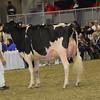 Royal16_Holstein_1M9A1418
