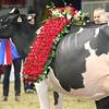 Royal16_Holstein_L32A5040
