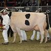 Royal16_Holstein_1M9A1291