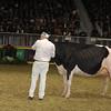 Royal16_Holstein_1M9A1768