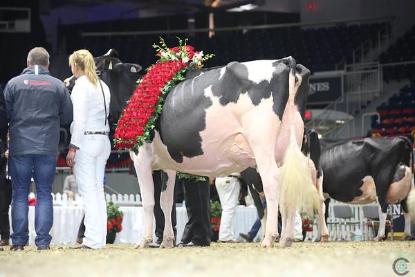 Royal16_Holstein_L32A5039