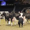 Royal16_Holstein_1M9A1268