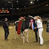 Royal16_Holstein_1M9A1846