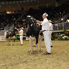 Royal16_Holstein_1M9A1174