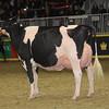 Royal16_Holstein_1M9A1766