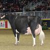 Royal16_Holstein_1M9A1706