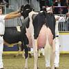 Royal16_Holstein_L32A4732