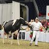 Royal16_Holstein_L32A4727