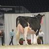 Royal16_Holstein_L32A4872