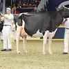 Royal16_Holstein_L32A4767
