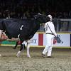 Royal16_Holstein_L32A4928