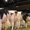 Royal16_Holstein_1M9A1207