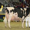 Royal16_Holstein_L32A4868