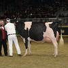 Royal16_Holstein_1M9A1770
