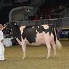Royal16_Holstein_1M9A1733