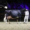 Royal16_Holstein_1M9A1499
