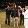 Royal16_Holstein_1M9A1836