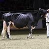 Royal16_Holstein_1M9A1613