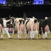 Royal16_Holstein_L32A4710