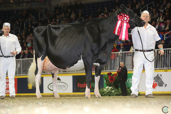 Royal16_Holstein_L32A4797