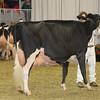 Royal16_Holstein_1M9A1438