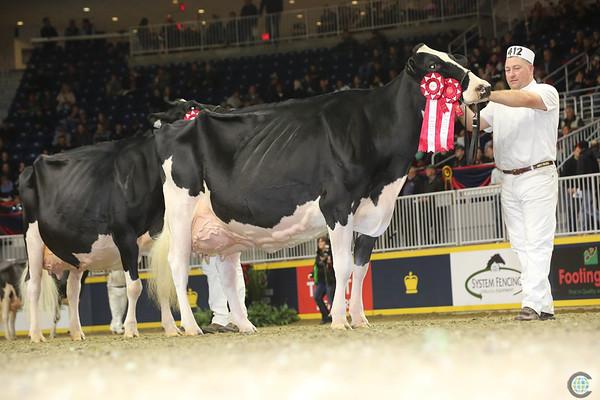 Royal16_Holstein_L32A4843