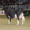 Royal16_Holstein_1M9A1675