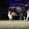 Royal16_Holstein_1M9A1577