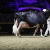 Royal16_Holstein_1M9A1578