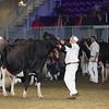 Royal16_Holstein_L32A4940