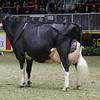 Royal16_Holstein_1M9A1716