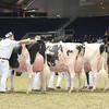 Royal16_Holstein_L32A4715