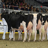 Royal16_Holstein_L32A4884