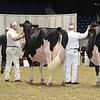 Royal16_Holstein_L32A4811