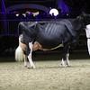 Royal16_Holstein_1M9A1496