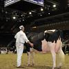 Royal16_Holstein_1M9A1186