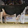 Royal16_Holstein_L32A4979