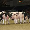 Royal16_Holstein_L32A4716
