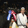 Royal16_Holstein_L32A4827