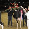 Royal16_Holstein_1M9A1833